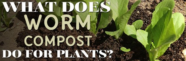What Does Worm Compost Do For Plants?