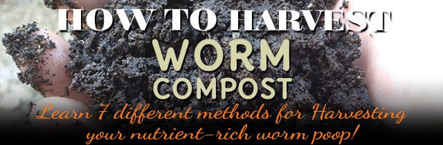 How-To-Harvest-Worm-Compost