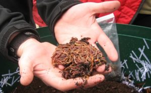 Two Handfuls of Worms!