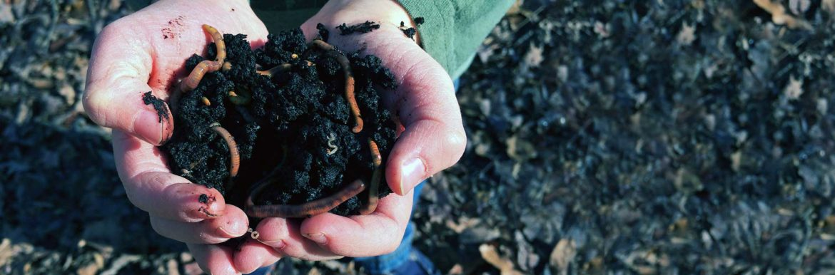 Worm Composting quickstart guide